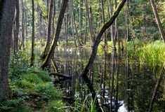 Briese Blog, Swan Lake, Blogging