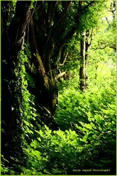 RAnDoM PatTerN photography by Annie Japaud : The Irish Green