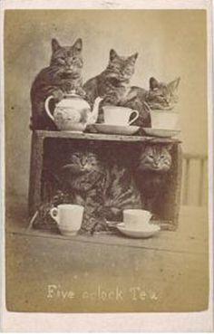 """Five O'Clock Tea""byrenownedVictorian cat photographer Harry Pointer, c. 1870 (viaRetronaut)"