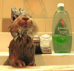 I love that the bunny uses curly hair shampoo.