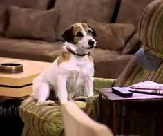 """#ThrowbackThursday: Eddie was definitely the cutest series character on the show """"Frasier."""" This Jack Russel Terrier, real name Moose, was the largest of his litter and just too much for his original owner to handle. Who was your favourite on-screen pet from a TV series? #PetPoolWarehouse"""