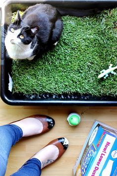 How To Make An Indoor Grass Lounge For Your Cat