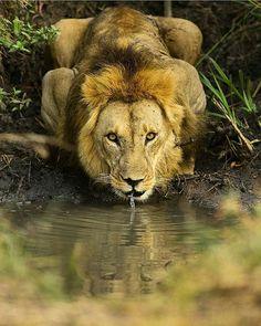 Majestic  Photography by @burakdogansoysal #Wildgeography