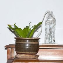 Your vacation can be stressful on your plants. Even while you are away, your garden needs water, so here are some ideas and tips for watering your plants while on vacation and caring for your garden and containers, so you can enjoy some time off.