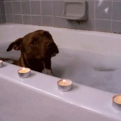 19 GIFs of Animals Enjoying a Nice, Relaxing Bath