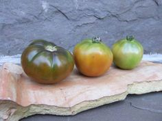 How to save tomatoes from frost - 3 tomatoes of varying ripeness