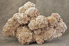 Selenite Desert Rose, Samalayuca, Chihuahua, Mexico 8 lb 8 oz Specimen