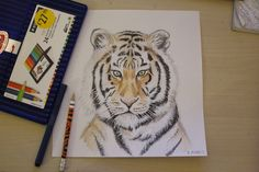 A tiger portrait done with Steadtler ergo soft colours and fineliner