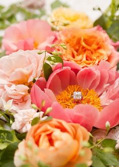 tangerine orange peach pink wedding colors + lovely idea for engagement ring photo