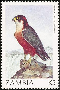 Taita Falcon stamps - mainly images - gallery format