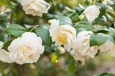 Japaninfo added 27 new photos to the album: ก่อนซากุระจะเริ่มบาน@Hattori Ryokuchi Botanical Garden — at 服部緑地.
