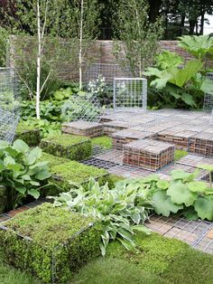 This modern garden uses gabions filled with stones and moss stacked next to hostas and other leafy plants for a unique, stylish look