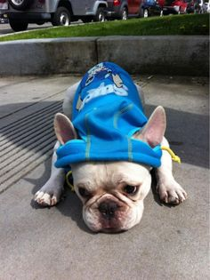 Stitch McCoy (Travie McCoy's dog) in his Stitch hoodie. Such a perfect name for a puppay with such large ears. Stitch Hoodie, Travie Mccoy, Disney Bound, Lilo And Stitch, Disney Stuff, Puppy Love, Doggies, French Bulldog, Ears