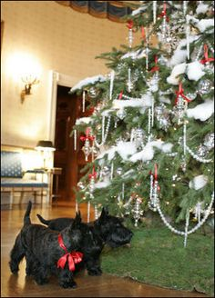 Barney and Miss Beazley visit the White House Christmas Tree in the Blue Room, Thursday, Nov. 30, 2006..