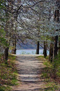 Spring Path by PaulWoj, via Flickr