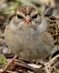 sparrow bush bbw personals Be prepared with the most accurate 10-day forecast for sparrow bush, ny ( 12780) with highs, lows, chance of precipitation from the weather channel and.