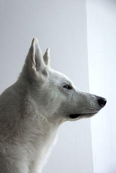 Iako on www.yummypets.com Dog, pets, animals, puppy, pooch, woof, doggie, pup…