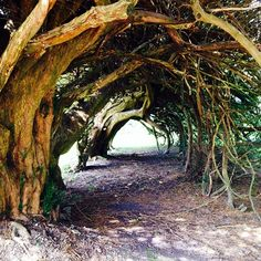 10 Magical Tree Tunnels Trees are known to be Earth's oldest, wisest and most beautiful beings. These canopies of magic above are filled with lush and vibrant leaves. The tree branches beautifully. Tree Tunnel, Magical Tree, Tree Branches, Trees, Landscape Photos, Most Beautiful, Earth, Places, Instagram Posts