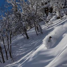 So, about Japan. A @christianpondella shot in Hokkaido. #PowderToThePeople