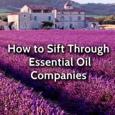 Simple ways to choose which companies to buy essential oils from, and what makes Ovvio Oils different
