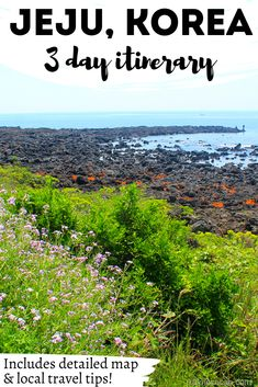 Where to stay on Jeju Island doesn't have to be a tough question! Between 3 UNESCO World Heritage sites and the delicious local foods, this massive guide to Jeju will answer any lingering questions you have about traveling Korea and planning your Jeju itinerary! | #travel #korea #jeju #island #itinerary #what #do #where #stay #best #time #visit #unique #things #see #foodie #local #budget #cheap #best Beautiful Places To Visit, Cool Places To Visit, Places To Travel, Travel Destinations, Amazing Places, South Korea Travel, Asia Travel, Travel Guides, Travel Tips