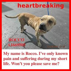 MIAMI URGENT !!! Rocco is 5 yrs old in need of a loving and FOREVER Home. He's the perfect size at 40 pounds. A1669505.