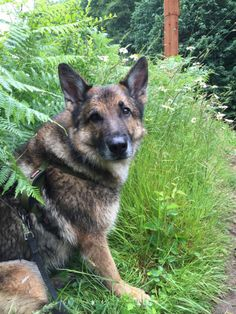 Adventures of the Oregon Forest Dog