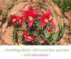 ... stumbling blocks will reveal how you #deal ~ with #alterations !