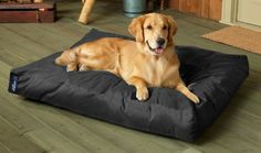 Check Out Some Cute Dog Beds :) http://modernhomedesign.org/dogbed