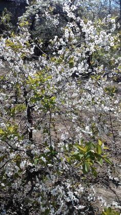 """Весна в Аккермане. Как тут не вспомнить """"Вишневый сад"""" А. П. Чехова? Действительно, цветущий сад это очень красиво."""