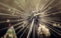 aDiatomea: Sphaeroidea Outtakes by MRK, via Behance