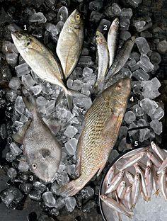 Peixes gostosos e com preços convidativos (Foto: Iara Venanzi/Editora Globo)