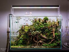 Aquascape #AquariumTips