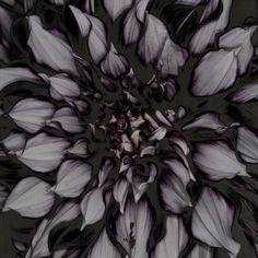 Dark Floral Photography : Dahlia by Carsten Witte