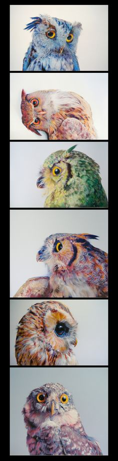 Owl realistic drawing