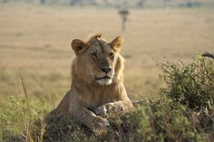 Are you looking for #TanzaniaBudgetSafari? We will provide safari packages at low cost. Know more @ https://www.northernmasailandsafaris.com/