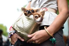 A woman carries a couple of dogs in a bag outside the Fendi fashion show during Milan Fashion Week