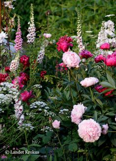 A garden is a planned space , enjoyment of plants and other forms of nature Peonies Garden, Pink Garden, Dream Garden, Beautiful Gardens, Beautiful Flowers, English Garden Design, Design Jardin, Small Gardens, Yard Landscaping