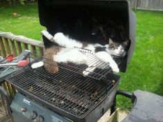 Cats Will Go Anywhere for a Warm Spot - LOLcats is the best place to find and submit funny cat memes and other silly cat materials to share with the world. We find the funny cats that make you LOL so that you don't have to. Funny Cats And Dogs, Silly Cats, Funny Animals, Cute Animals, Stupid Cat, Crazy Cat Lady, Crazy Cats, I Love Cats, Cute Cats