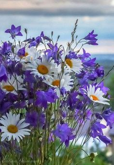 Daisies, simple and sweet. Daisies are the way to win my heart. Fresh Flowers, Purple Flowers, Spring Flowers, Wild Flowers, Beautiful Flowers, Bouquet Champetre, Daisy Love, Belle Photo, Trees To Plant