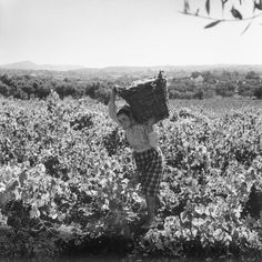Grape harvest (Portugal) - photo by Artur Pastor Fine Art Photo, Photo Art, Old Photos, Vintage Photos, Great Places To Travel, Cultural Events, Spain And Portugal, Wine Time, Historical Sites