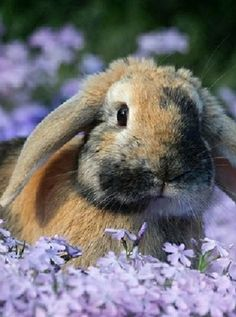 A rabbit in a field of flowers.