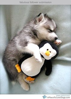 Cute dog holding his dear penguin as he slumbers on the softest blanket made by the fluffiest baby blue clouds in heaven