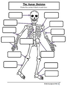 Image result for teacher handouts skeleton diagram without