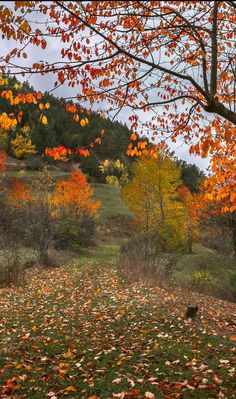autumn by Turan Reis - Photo 127700163 - 500px (fall colours, Turkey)