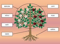 Výsledek obrázku pro plody stromů pracovní listy Preschool, Education, Fruit, Kid Garden, Kindergarten, Onderwijs, Learning, Preschools, Kindergarten Center Management