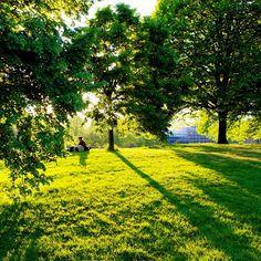 Shy as english #summer ☀🌳🇬🇧 #london #park #garden #hydepark #nikon #d600 #green #sunny #light #shadow #hill #nofilter