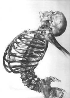 Human skeleton - ballpoint pen drawing by young artist Andrea Schillaci from Italy Skeleton Drawings, Human Skeleton, Cool Drawings, Skeleton Art, Skeleton Body, Drawing Faces, Illustration Inspiration, Illustration Art, Bones