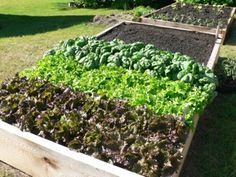 Valuable tips for growing a great vegetable garden.
