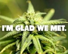 Its 420 everywhere